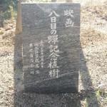 『八日目の蝉』記念樹